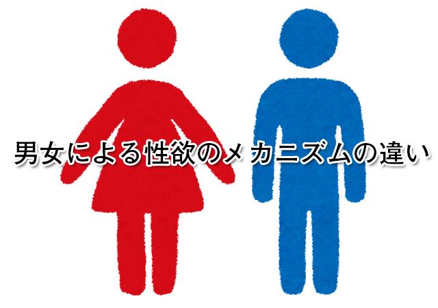 男女による性欲のメカニズムの違い